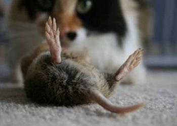 Биологические методы борьбы с крысами