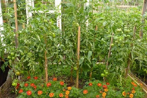 Отпугивающие растения