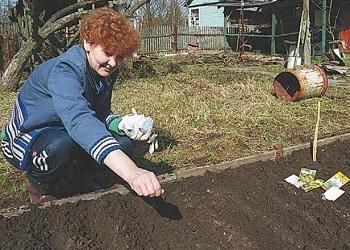 Как посадить кабачки