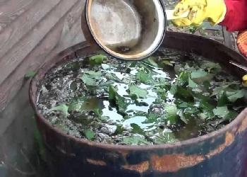Подкормка салата из трав