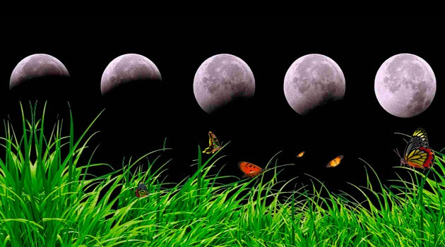 влияние луны на посадку растений