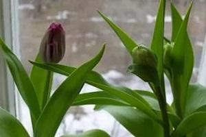 как добиться цветения