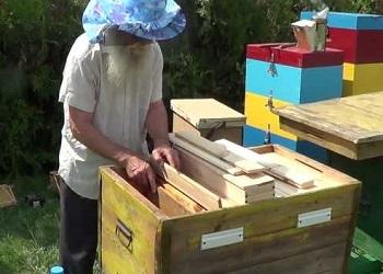 как работать с пчёлами в лежаке