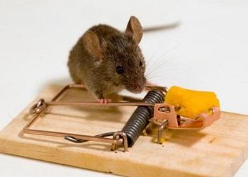 механические методы борьбы с крысами