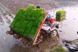 техника для посева риса