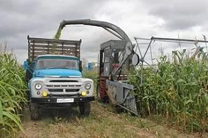 урожайность кукурузы на силос