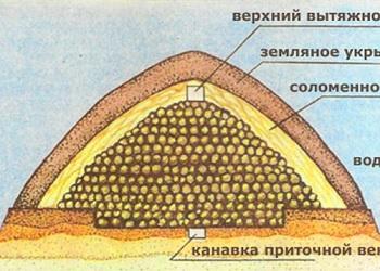 Как хранить картофель в яме